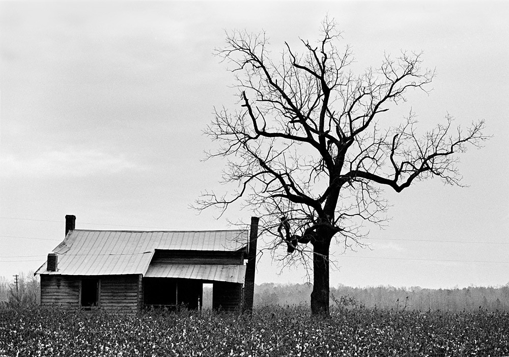 Cotton Farm, Halifax County, December 1971