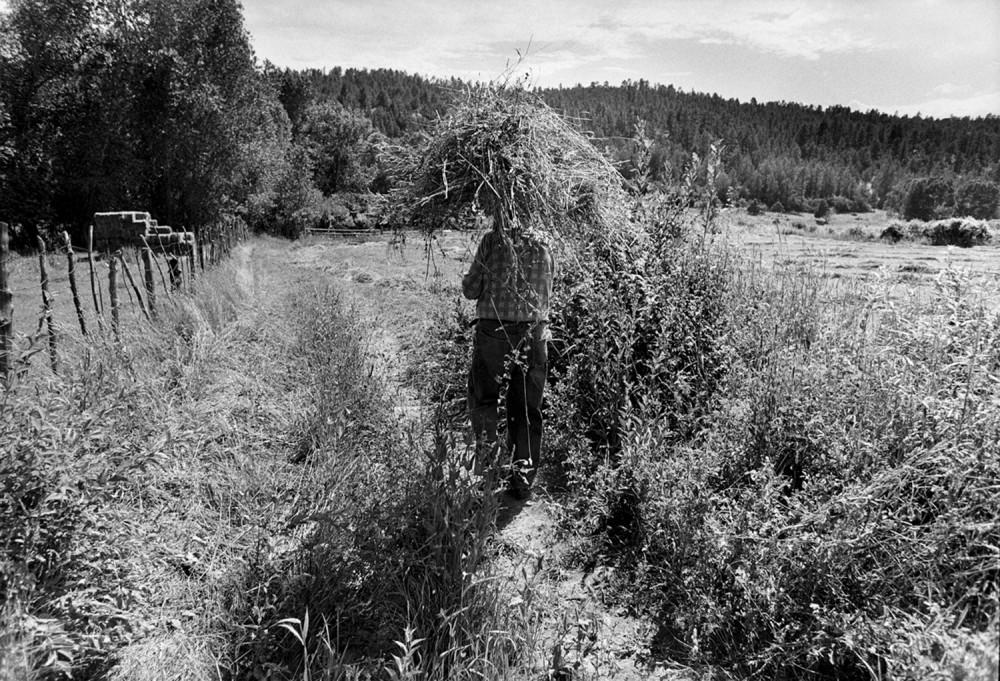 Preparations for baling hay, El Valle, New Mexico, 1979