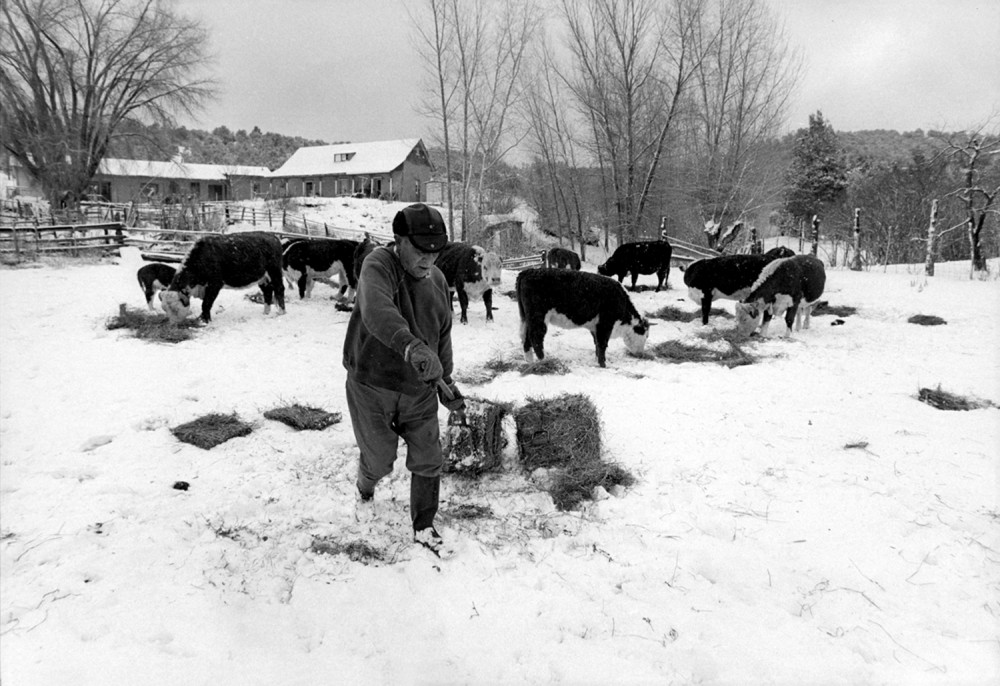 Jacobo feeding the cows in the winter, El Valle, New Mexico, 1979