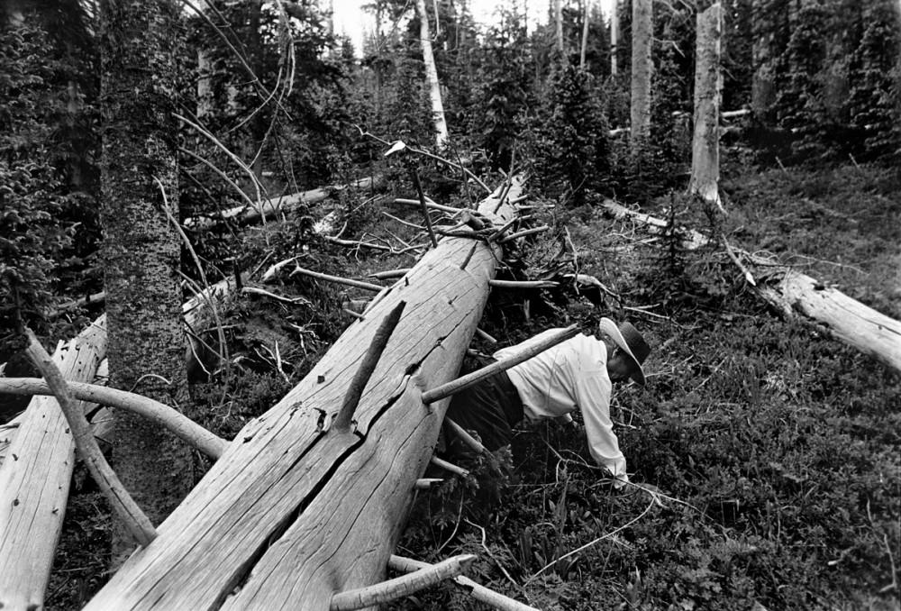 Jacobo Romero, Kit Carson National Forest above Pot Creek, New Mexico, 1979