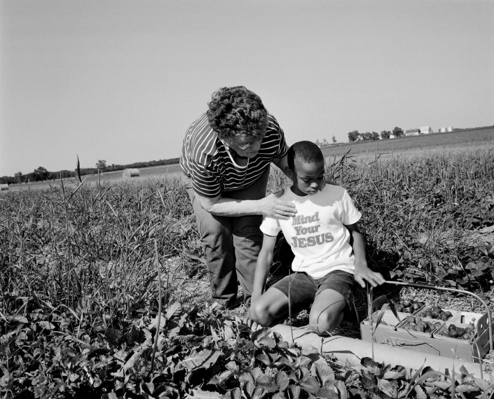 Strawberry picking near Rantoul, Illinois, 2001